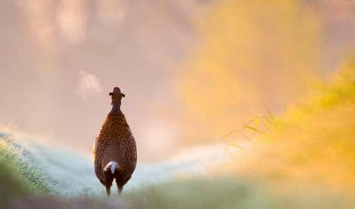 Zwischen Windflüchtern und dem Vogel des Glücks