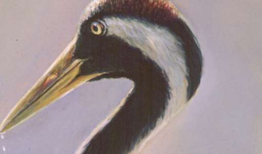 Naturerlebnis: Zugvögel auf dem Darß