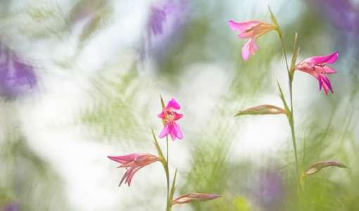 Mit der Linse gemalt - kreative Naturfotografie