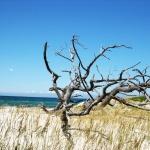 Fotografieren in der Natur von Prerow